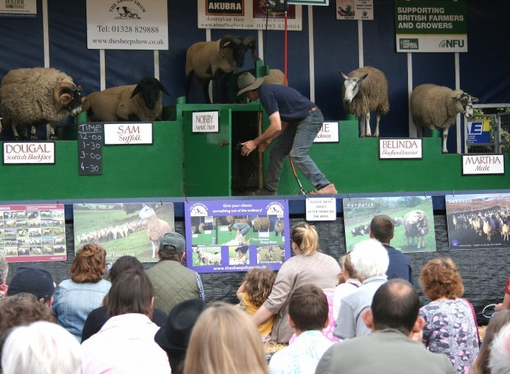 Dancing sheep expected to be hit at Staffordshire County Show