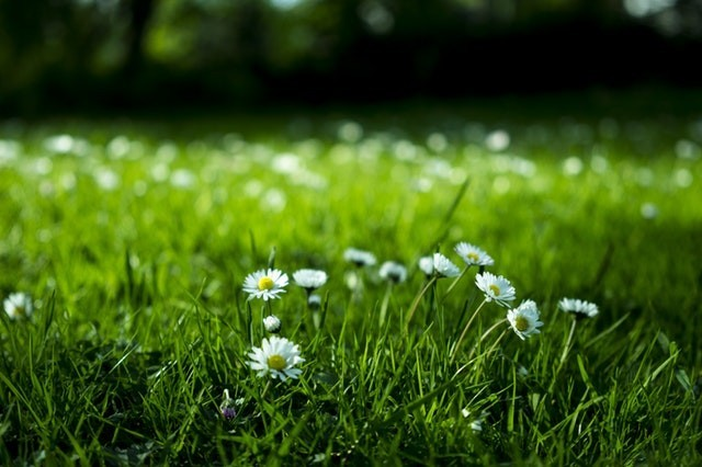 Shrewsbury gardens open to public