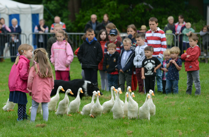 Country pursuits area a must-see attraction at Staffordshire County Show