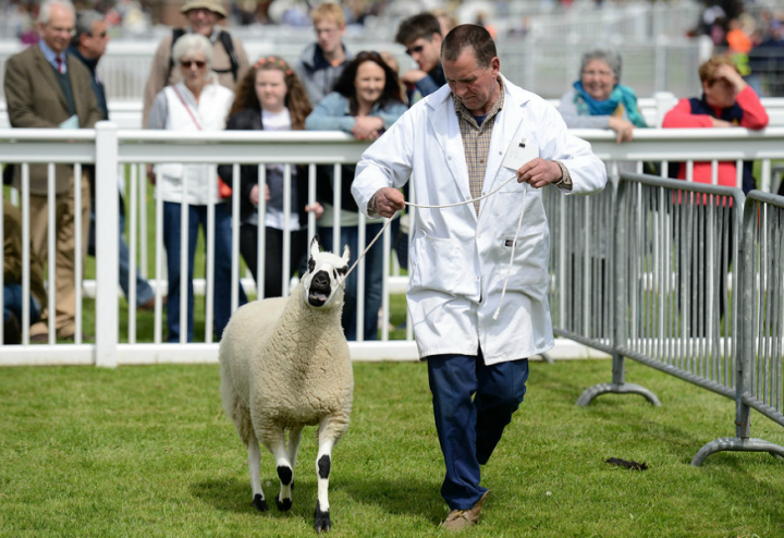 Virtual video judging for cattle competition a first for county show
